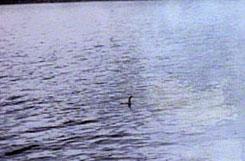 Foto tomada en 1934 por el Coronel Robert Wilson, años mas tarde se demostró que habia sido trucada