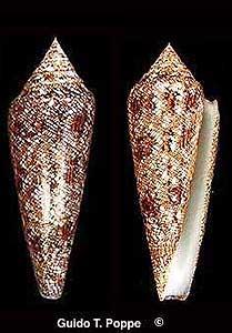 Las conchas más lindas en fotos