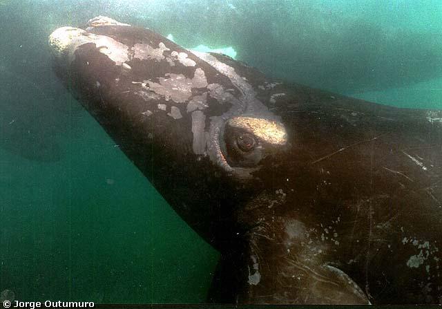 El animal más grande de la historia de la Tierra